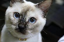 青目ねこ プリ画像