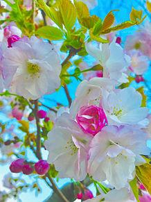 桜🌸保存▹▸いいね プリ画像