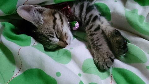 俺の家の猫!かわゆすwwwの画像(プリ画像)