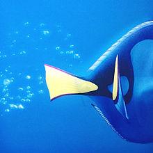 Disney-ファインディングドリーの画像(ファインディング ドリーに関連した画像)