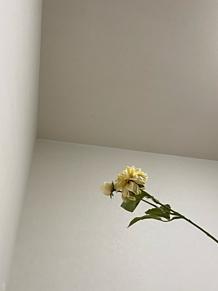 エモい写真シンプル壁紙の画像(シンプル壁紙に関連した画像)