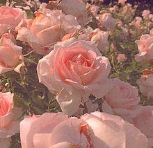 ピンク 保存はいいね👍の画像(おしゃれ 待ち受けに関連した画像)