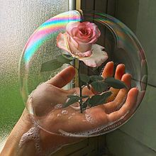 薔薇の画像(海外 オシャレに関連した画像)
