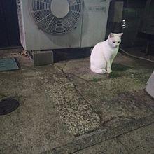 猫の画像(海外 オシャレに関連した画像)