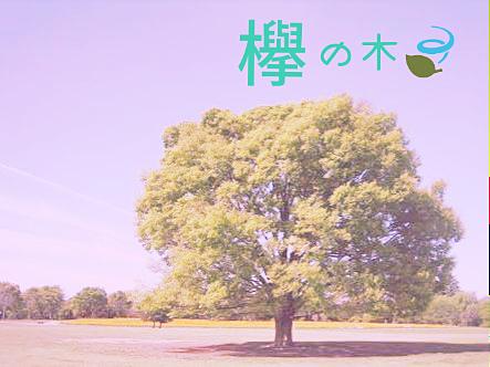 欅の木の画像(プリ画像)