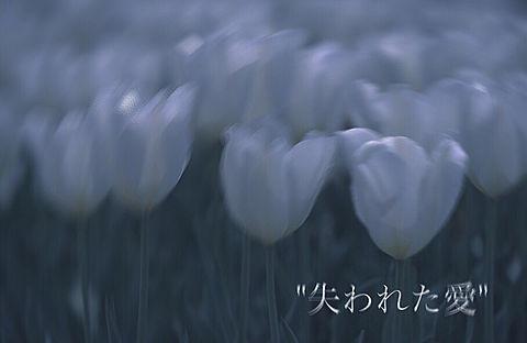 花言葉 保存はいいねの画像(プリ画像)