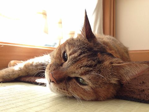 猫2の画像(プリ画像)
