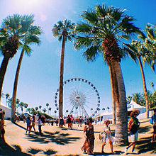 palm treeの画像(プリ画像)