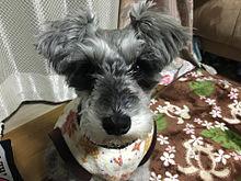 愛犬♡の画像(プリ画像)