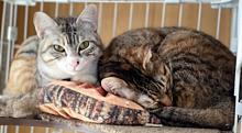 ウチの猫ちゃん🥰 プリ画像