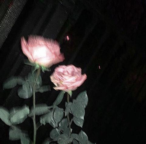 rosesの画像(プリ画像)