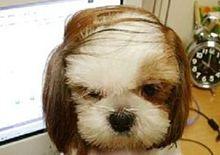 犬 おもしろ プリ画像