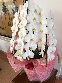 母の施設のお花 プリ画像