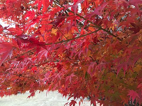 紅葉の画像 プリ画像