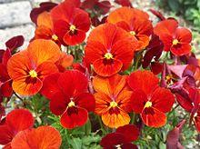 お花見てきましたの画像(お花見に関連した画像)