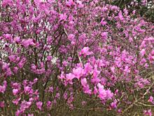 お花を見て来ました🌸 プリ画像