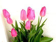 ピンクのチューリップの画像(ピンクのチューリップに関連した画像)