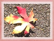 落ち葉🍁 プリ画像