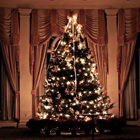 クリスマス/クリスマスツリー/キラキラ/キレイの画像(プリ画像)