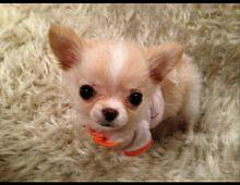 釈由美子 愛犬の画像(釈由美子に関連した画像)