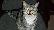 猫がくしゃみする瞬間の画像 おもしろ画像 プリ画像