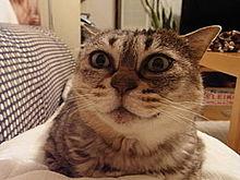 猫 おもしろ画像 プリ画像