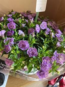 紫色の花束  プリ画像