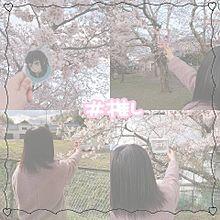 桜 with 推し プリ画像