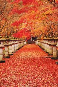 壁紙 紅葉🍁の画像(かわいい 紅葉に関連した画像)