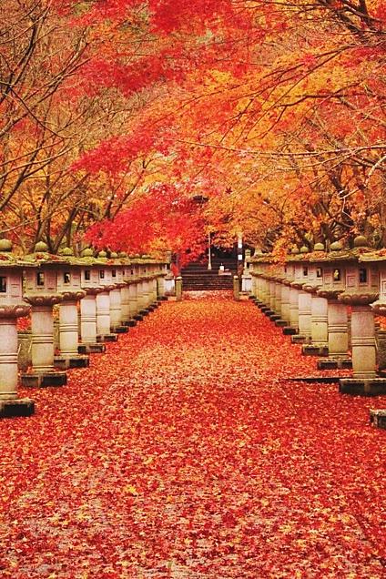 壁紙 紅葉🍁の画像 プリ画像
