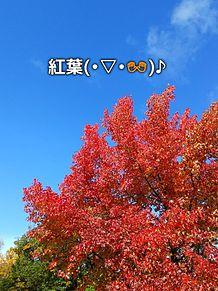 山形県総合運動公園の画像(山形に関連した画像)