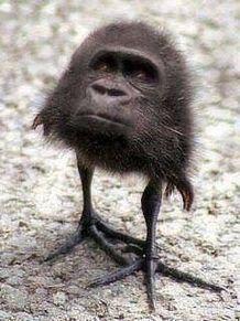 ゴリ鳥の画像(プリ画像)