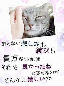 猫 アイネクライネの画像(プリ画像)