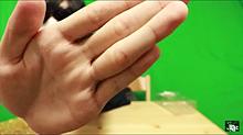 フジの手相の画像(手相に関連した画像)