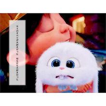 うさぎ スノーボール ペット 映画の画像16点 完全無料画像検索のプリ