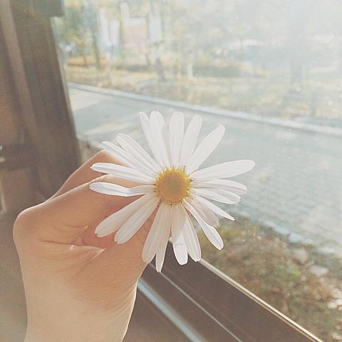 花。の画像(プリ画像)