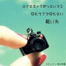 花の写真の画像(プリ画像)