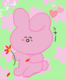 花占いうさぎさんの画像(占いに関連した画像)