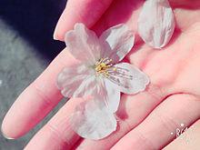 花・エッフェル塔の画像(エッフェル塔に関連した画像)