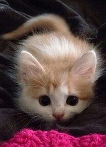 子猫は可愛いよね。の画像(プリ画像)