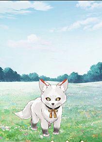 白狐の画像(白狐に関連した画像)