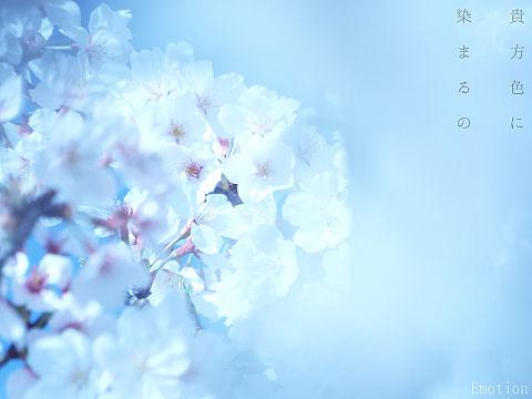 桜 写真の画像(プリ画像)