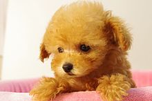 ポカーン犬 プリ画像
