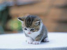 小さくて可愛い猫 プリ画像