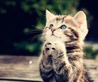 願い事をしている猫の画像 プリ画像