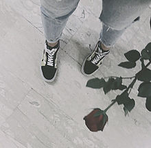 coolの画像(バラ/ローズ/薔薇に関連した画像)