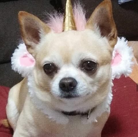 犬の画像 プリ画像