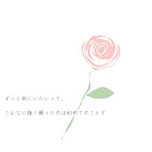 薔薇の花の画像(恋愛に関連した画像)