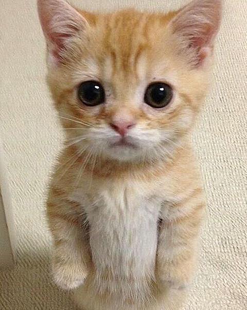 かわいい動物の画像 プリ画像