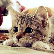 かわいい動物 プリ画像